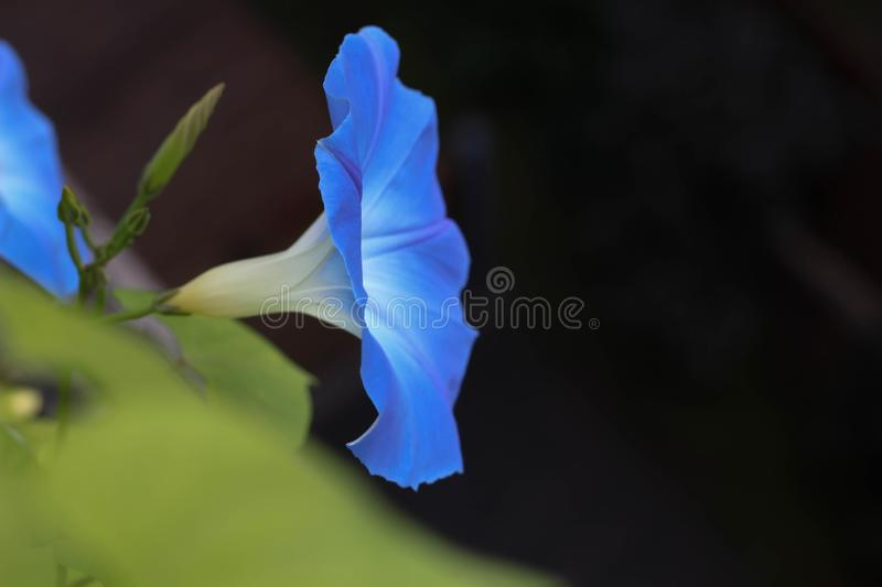 Small blue flowers on flowerbed at summer garden. Up. Stock photo royalty free stock image