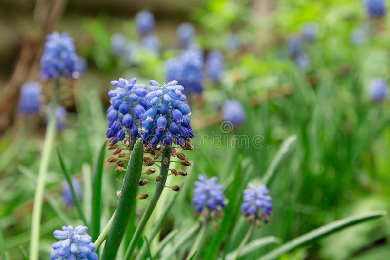 Small blue flowers on the green background royalty free stock photography