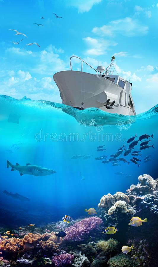 Small boat in the ocean. Marine animals. royalty free stock image