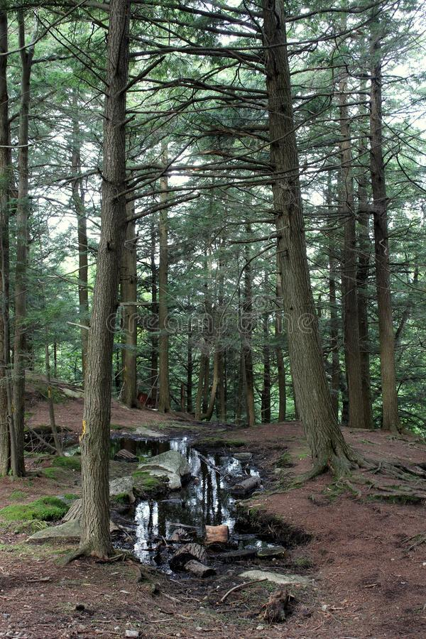 Small body of water tucked between trees at summit of mountain. Tall pine trees with body of water and bed of pine needles seen by hikers who make it to rest at stock photos