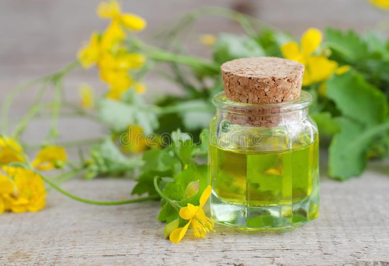 Small bottle of celandine infusion royalty free stock photography