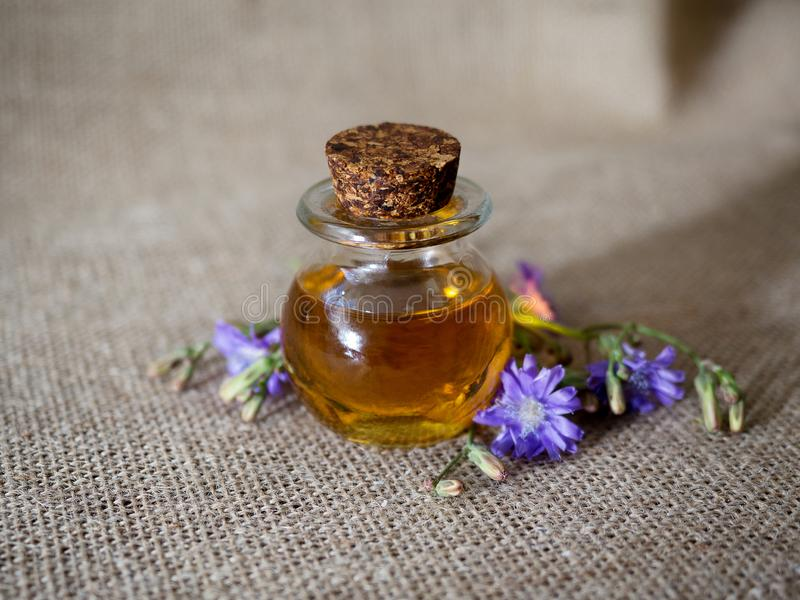 Small bottle of natural essential oil among blue flowers on canvas background. Organic cosmetic products, selective royalty free stock photo