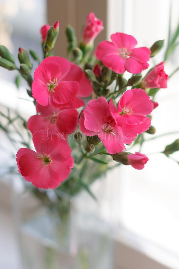Small bouquet of bright pink carnations in the glass vase stock photos