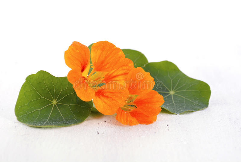 Small bouquet of edible nasturtium flowers. Small bouquet of edible orange nasturtium flowers and leaves on white wood rustic table, for floral or salad stock image