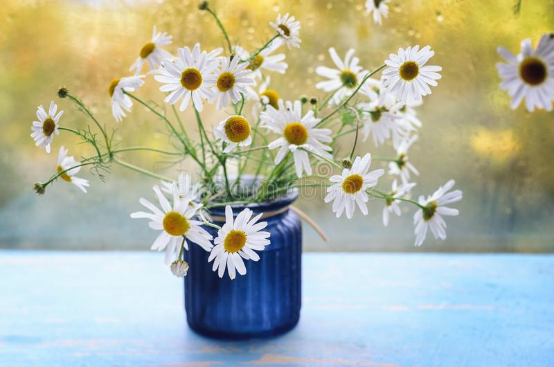 Blue vase with a bouquet of chamomiles is on the windowsill against the background of the rising sun royalty free stock images