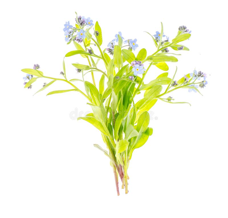 Small Bouquet Of Flowers With Blue Petals Stock Image - Image of ...