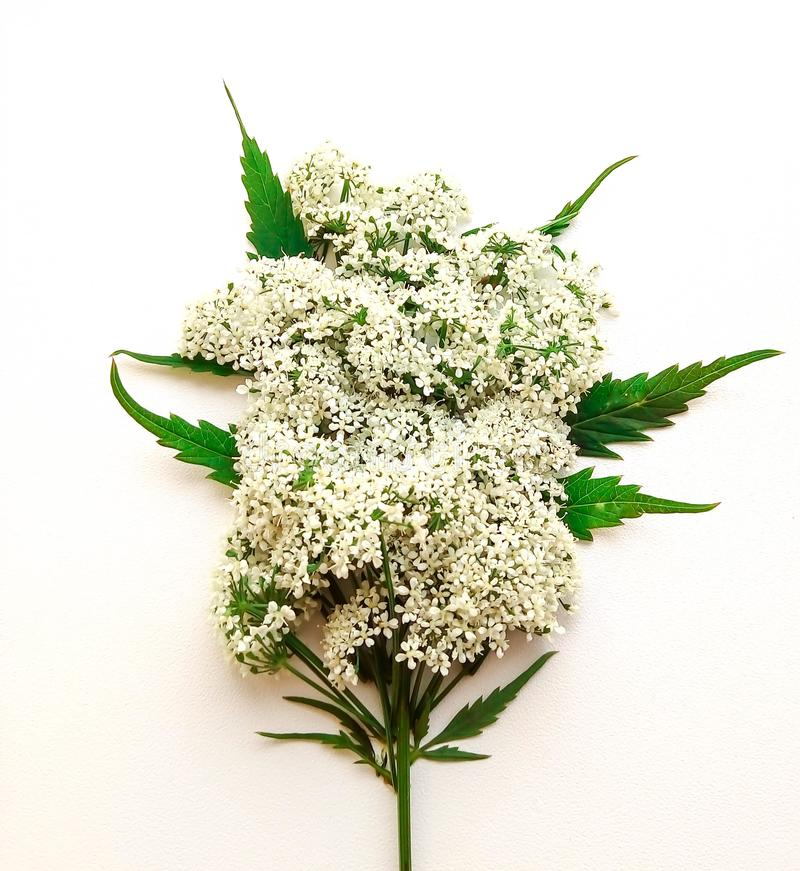 A small bouquet of white flowers stock images