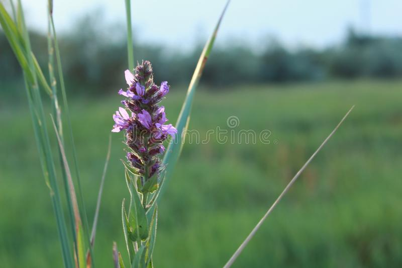 A small bouquet of wild flowers royalty free stock images