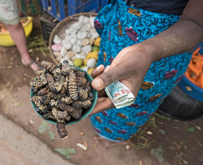 Small bowl of roasted mopane caterpillar, Gonimbrasia belina at the market in livingstone, zambia.  royalty free stock photos