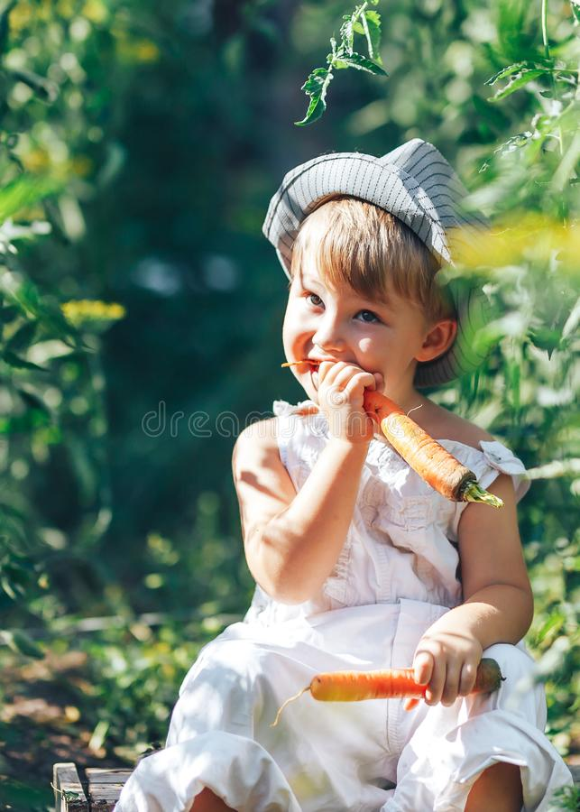 Small boy farmer kid sitting in line of tomatoes plants, wearing white casual overalls suit and grey hat, eating carrot, harvest royalty free stock images