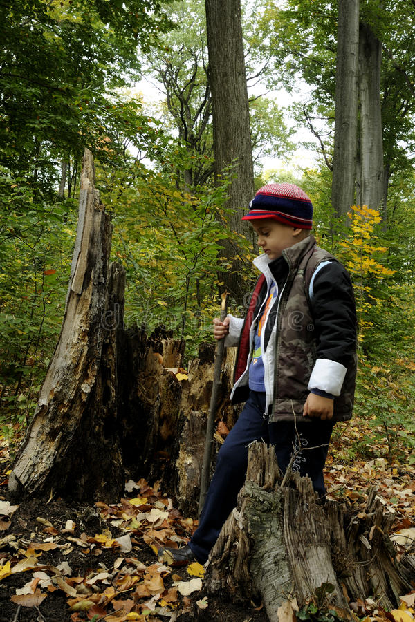 Small boy in forest