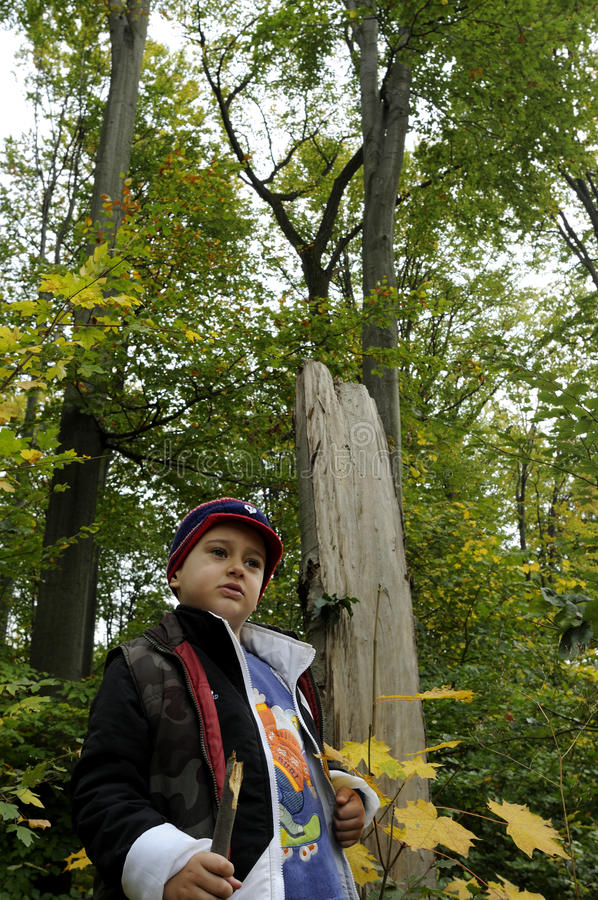 Small boy in forest stock photos
