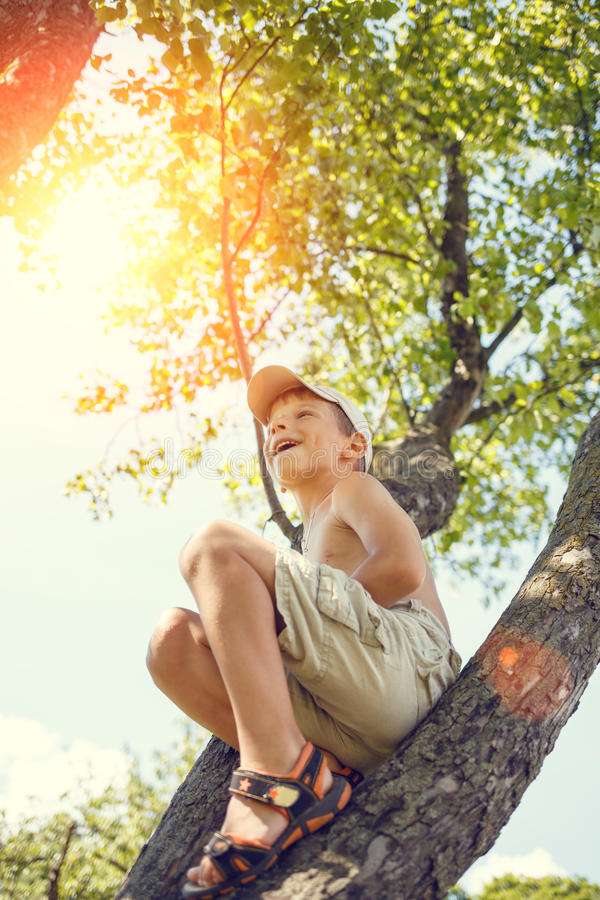 Small boy has fun climbing on the tree. Adorable small boy has fun climbing on the tree at summer day. Happy childhood background stock image