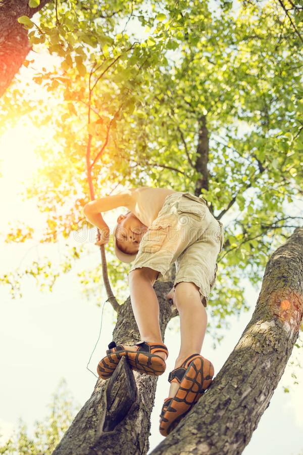 Small boy has fun climbing on the tree. Adorable small boy has fun climbing on the tree at summer day. Happy childhood background royalty free stock image