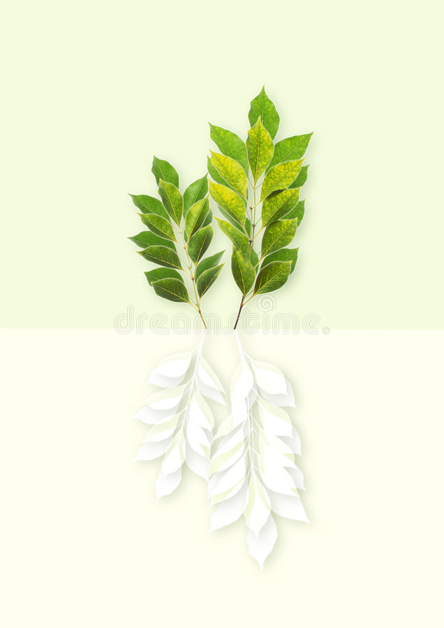 Small Branches Of Leaves Stock Images