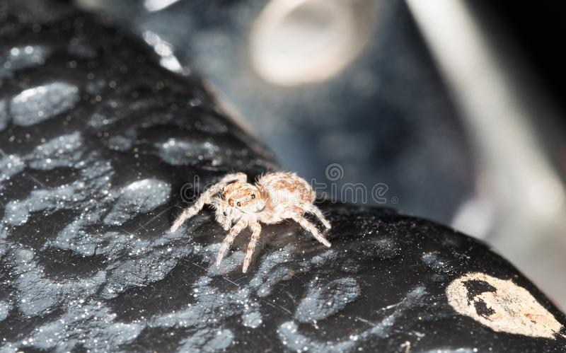 Small brawn speder on black rock in city under roof. Small brawn spider on black rock in city under roof stock images