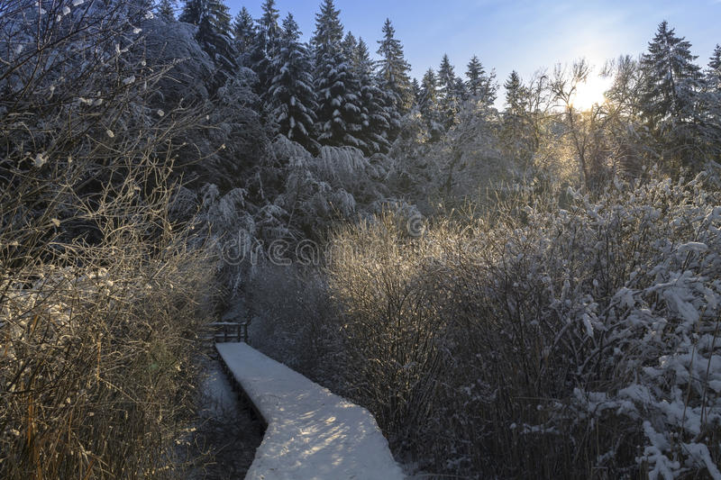 Small bridge in snowy winter forest. Croatia stock images