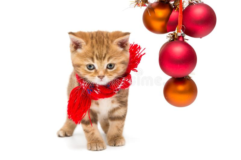 Small British kitten and Christmas royalty free stock photo