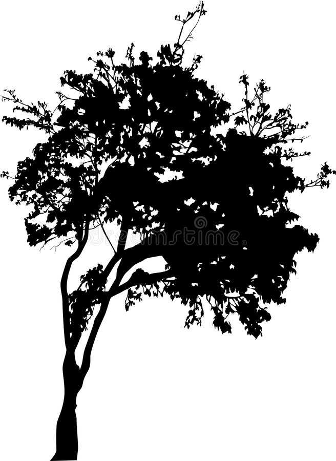 Small broad-leaved tree