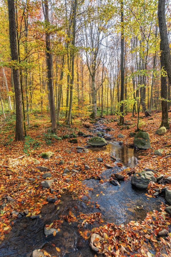 Small brook among rock in forest stock photo