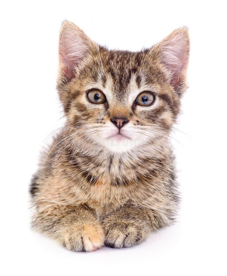 Kitten on white background. stock photo