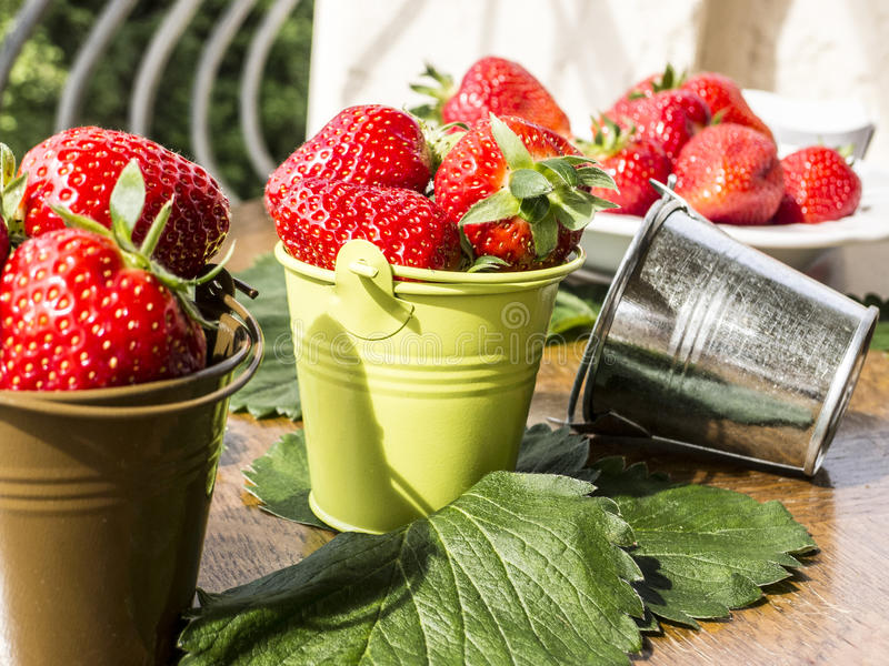 Small buckets with strawberries. Fresh strawberries in a small decorative different color buckets royalty free stock photo