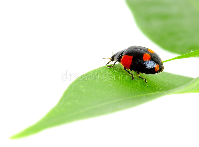 The small bug. On a leaf of a plant stock photo