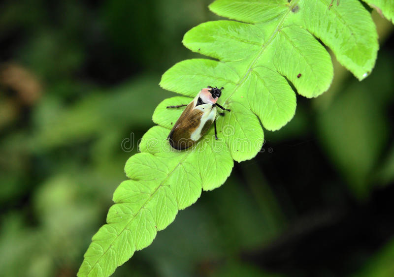 Small bug on a plant leaf stock photography