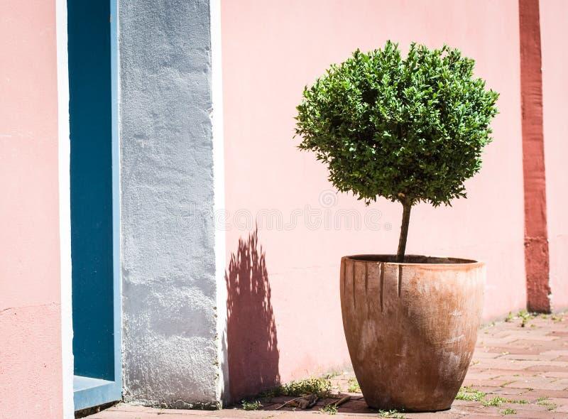 Download Small bush stock photo. Image of evergreen, image, freshness - 28742114