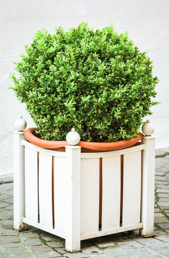 Download Small bush stock image. Image of decoration, ornamental - 28742151