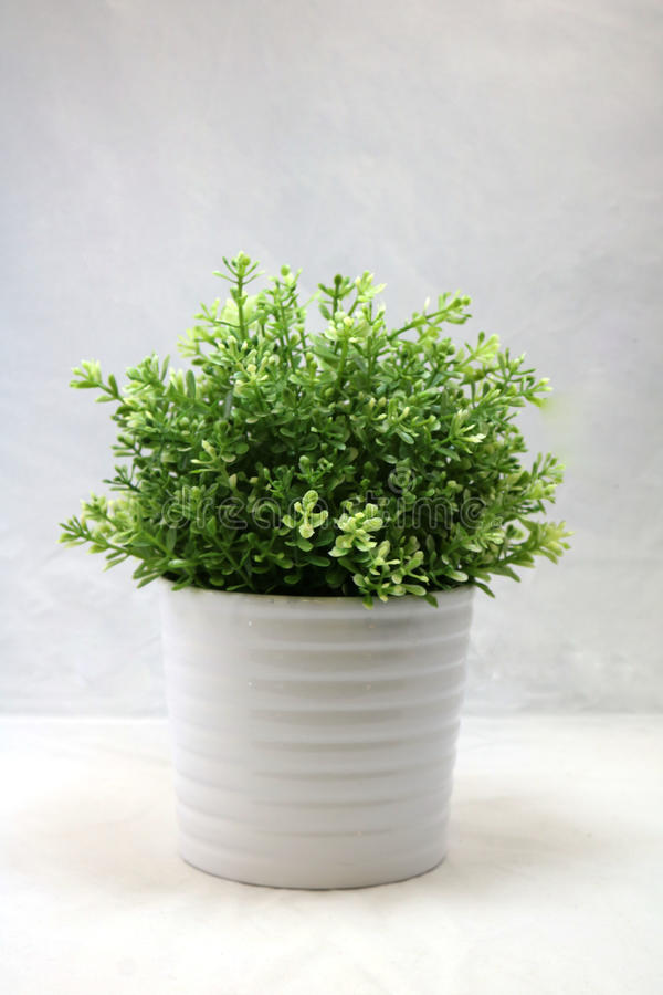 A small bush royalty free stock image