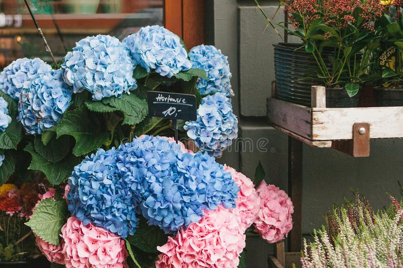 A small business for selling flowers. Blue and pink hydrangeas in a wooden box in a street store. stock image