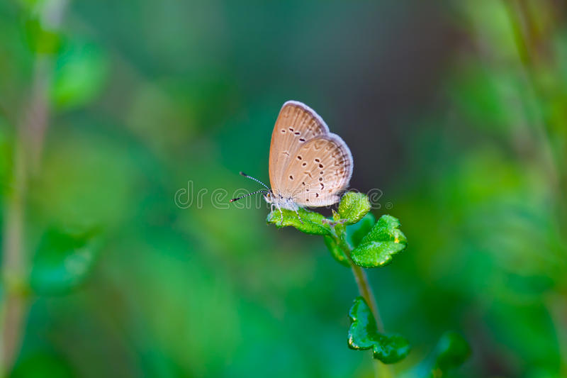 A Small Butterfly Royalty Free Stock Images