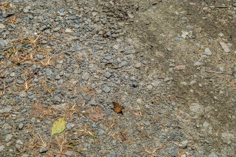 Small butterfly on the ground royalty free stock images