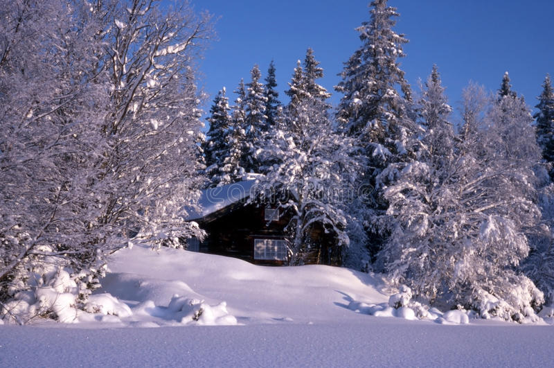 Small cabin Surrounded by snow trees stock photo