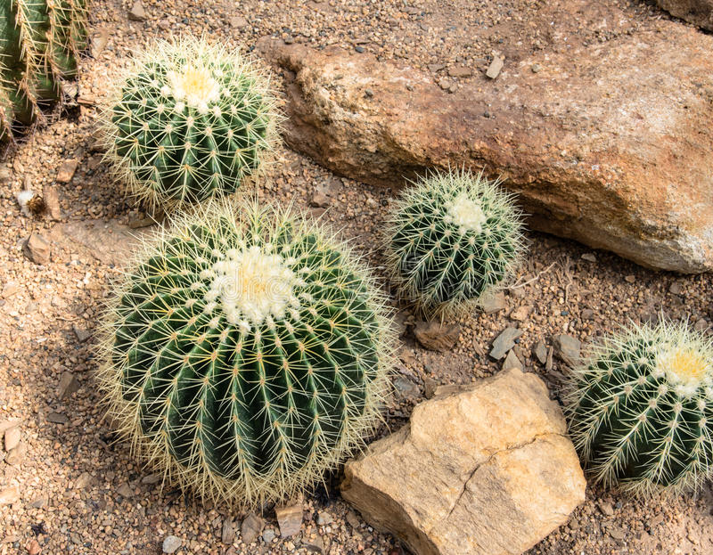 Small cactus and flower blooming in the garden royalty free stock photography