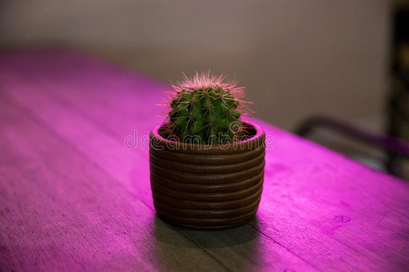 Small cactus in flower pot on purple background with neon glow stock photo