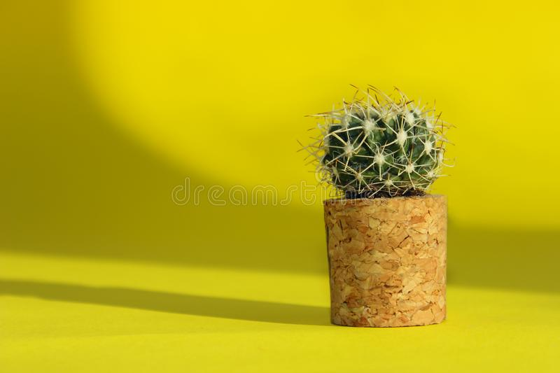 Small Cactus Indoors. Yellow Colors. Abstract Nature Background. Natural Background. Small Cactus Indoors. Yellow Colors royalty free stock photos