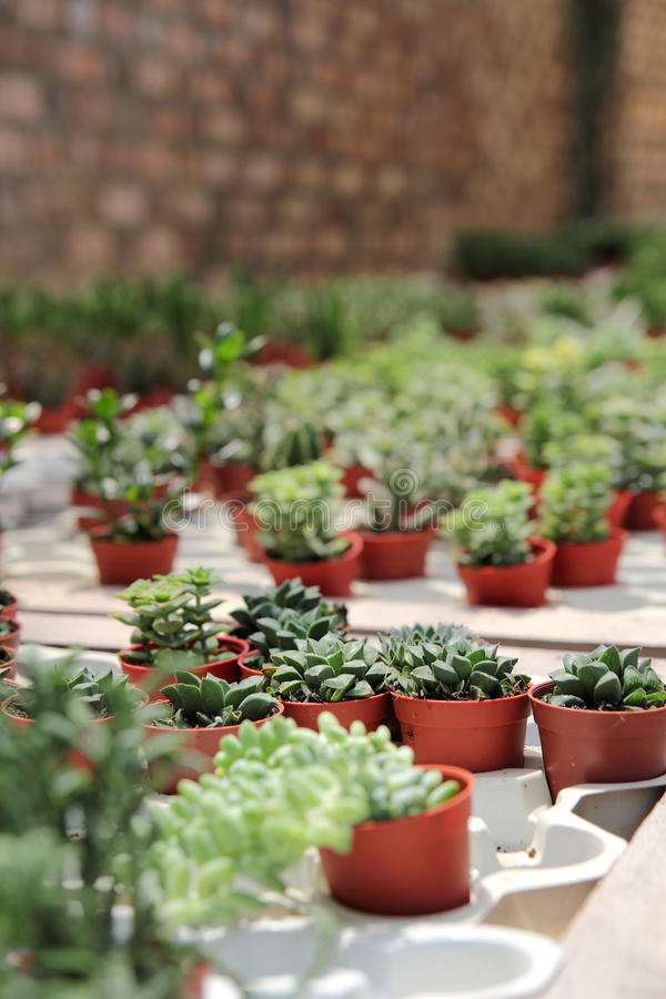 Download Small Cactus Plants stock photo. Image of background - 16080248