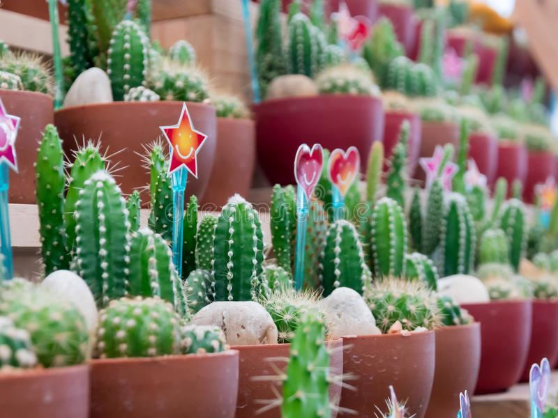 Small cactus in a plastic pot with heart-shaped sign and smile. stock photos
