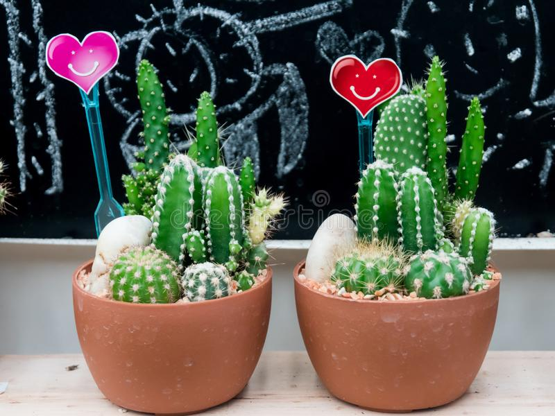 Small cactus in a plastic pot with heart-shaped sign and smile. stock images