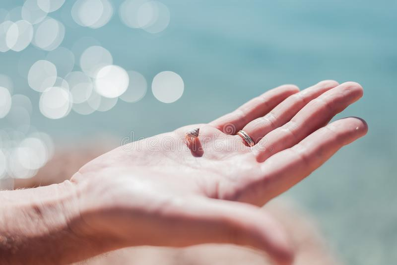 Small cancer hermit with his shell on the man`s hand royalty free stock photography