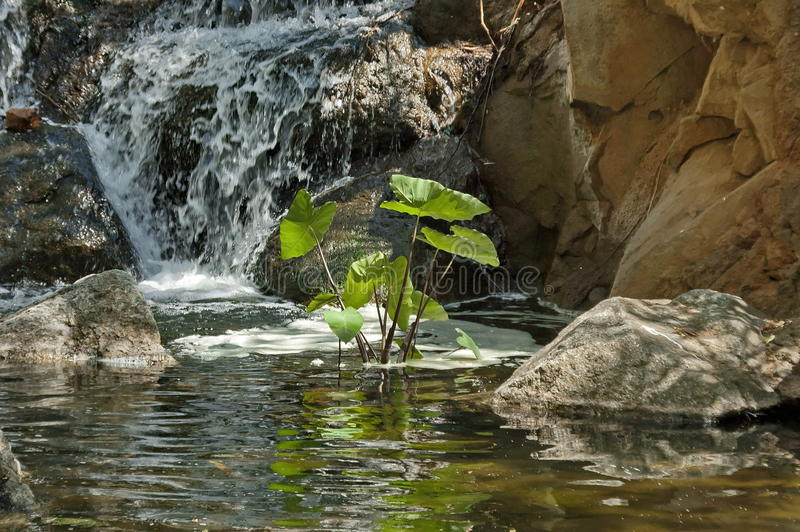 Small Cascade Waterfall By Palace Of The Lost City Hotel In Sun City Stock Photos