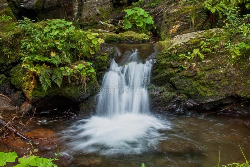 Small cascading waterfall in lush forest stock photo