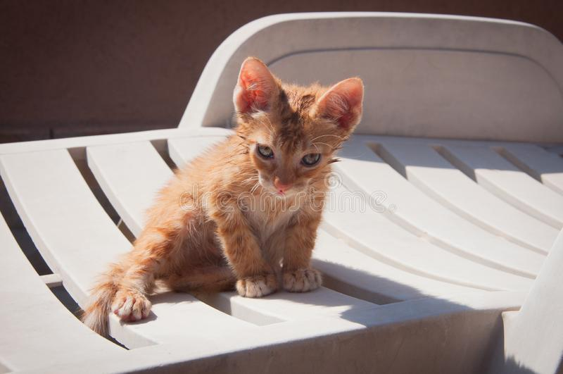 A small cat bathed in water rests royalty free stock photography
