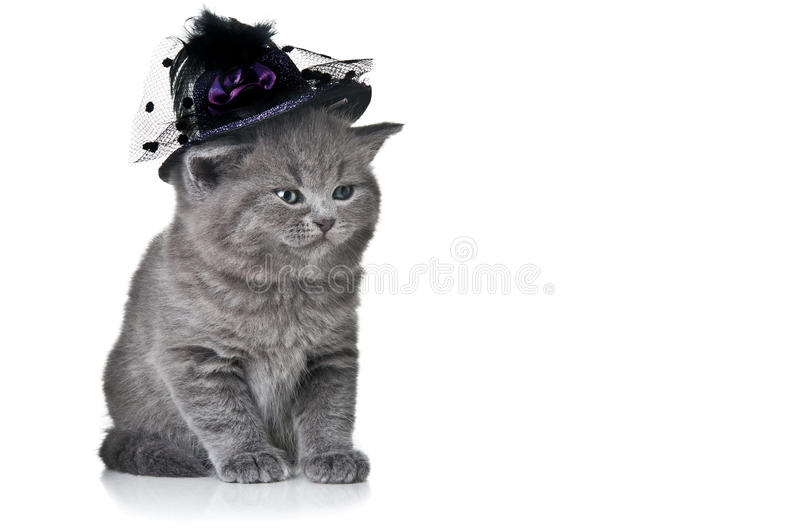 Download Small cat with hat stock photo. Image of background, playful - 24090920