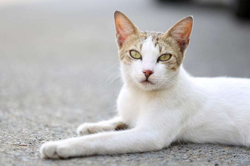 Small cat looking and relaxing to tourists and says hello to new visitors in the streets of a small village town, al nakil, Saudi. Small cat looking and relaxing stock photo