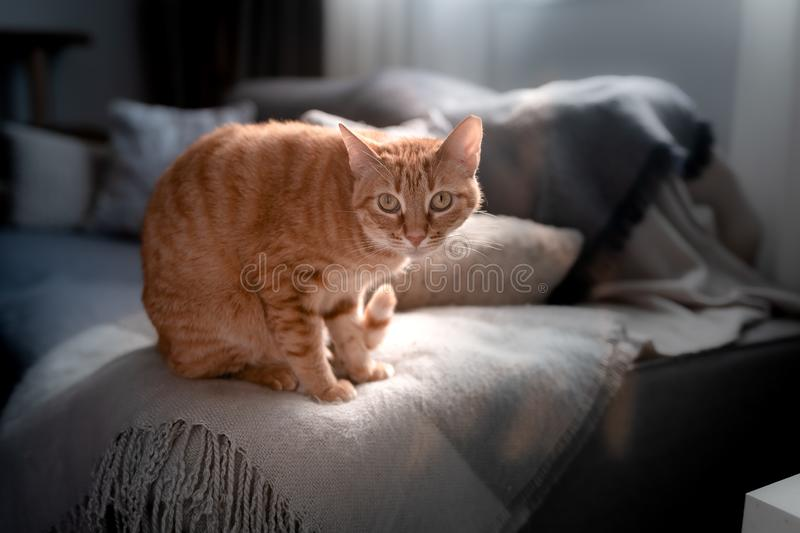 Small cat under the window is scared with a noise royalty free stock photos