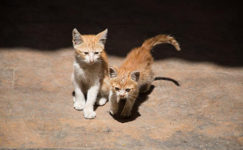 Small cats in the historic center of Tripoli, Lebanon. June, 2019 royalty free stock photography