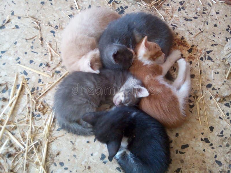 Small cats sleeps royalty free stock image